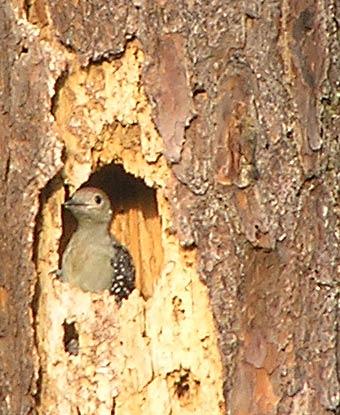 bird-pictures-013.jpg