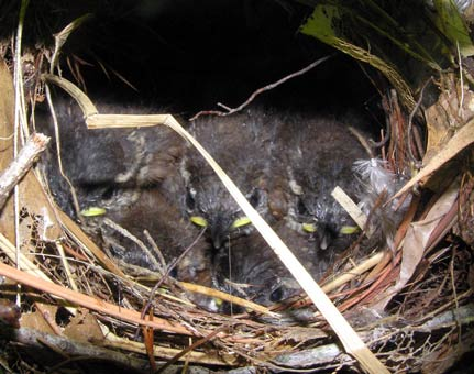last picture of baby wrens before launch